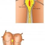 Schéma TJ Bouveret physiologie